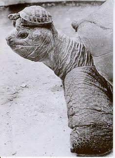 Sköldpadda på sköldpadda - DJUR på DJUR.