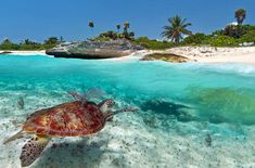 Mexico Beaches - The east's temperate weather and winds keep the sea tranquil and enjoyable—perfect for snorkeling and bathing.
