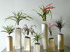 poikilohydric plants - Hľadať Googlom