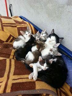 Minnoş Yavrularıyla İftihar Eden Minnoş Kedilerden 61 Aile Fotoğrafı