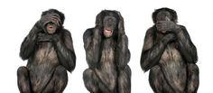 El lenguaje del chimpancé