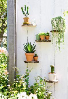 Vertical garden for a patio wall