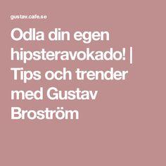 Odla din egen hipsteravokado! | Tips och trender med Gustav Broström