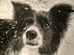 """Marcus Honey - Artist 'Cassie in the Snow'. Stabilo Carbothello and Faber Castell Pitt pastel pencils and a few Royal Sovereign Wolffs Carbon pencils on Clairfontaine Pastelmat size 16""""x 14"""""""
