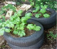 Stack Up Used Auto Tires And Fill With Garden Soil To Use As Containers For Growing