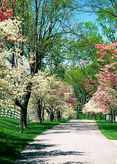 beautiful blooms on trees