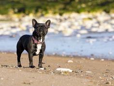 Empieza el buen tiempo y cada vez tenemos más ganas de estar al aire libre con nuestro perro, disfrutando del sol y de la naturaleza. La …