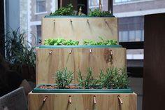 indoor hydroponic farm