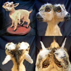 A faux conjoined goat I did several years ago, constructed with twin stillborn pygmy goats. This piece is one of several freak goats I have created over the years. Bad Taxidermy, Stillborn, Mixed Media Sculpture, Weird Art, Memento Mori, Rogues, Twins, Pygmy Goats, Creatures