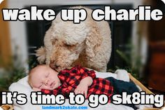 Been caught napping? Wake up! It's time to go sk8! Family Nite is tonight @6:30pm