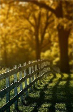 fence line between Rose cottage & farm land