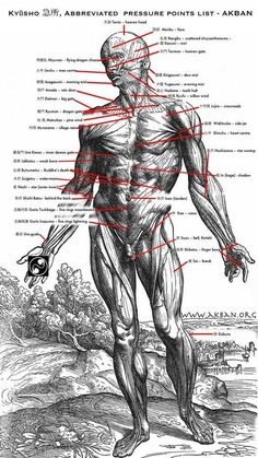 The Basics Of Judo – Martial Arts Techniques Martial Arts Techniques, Self Defense Techniques, Aikido Techniques, Jiu Jitsu, Kung Fu, Pressure Points Chart, Hand To Hand Combat, Wing Chun, Mixed Martial Arts