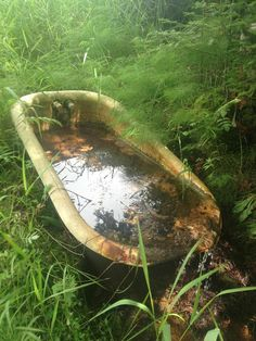 Abandoned Bathtub in the Woods of Northern Wisconsin