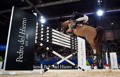 "horseswag: "" manesandhooves: "" Pedro del Hierro's prize at the Madrid Horse Week. "" this is such a cool angle omg """