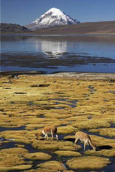 Lago chungara norte de Arica Chile