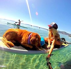 I have always wanted a selfie stick and always wished my dog would like water!!
