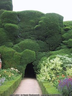'Cloud-Clipped' Yew Hedge at Powis... (C) Sarah Charlesworth :: Geograph Britain and Ireland