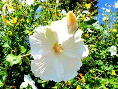 A tour of the Daniel Stowe Botanical Gardens