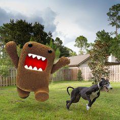 friendly game of tag... #greyhound #greyhoundrescue #greyhoundsofinstagram #45mphcouchpotato #adopted #rescue #domo