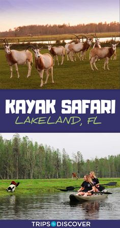 Kayak Adventures You Can Go On A Kayak Safari in Lakeland, Florida Places In Florida, Visit Florida, Florida Vacation, Florida Travel, Vacation Spots, Travel Usa, Florida Living, Florida Keys, Mexico Travel