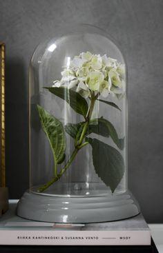 Glaskupa av ett gammalt bordsur