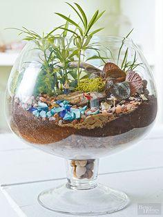 Terrario hadas Jardines: Big Fish, Small Container