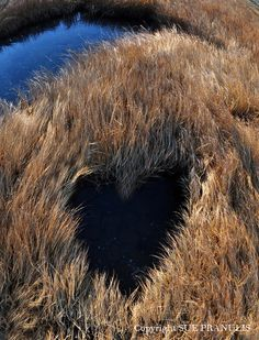 Natural Heart by Sue Pranulis