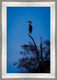 Nature Print featuring the photograph Great Blue Silhouette by Jeff Phillippi