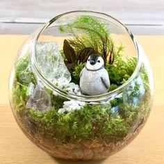 Related image Miniature Gardens, Terrarium, Miniatures, Image, Decor, Terrariums, Decoration, Decorating, Minis
