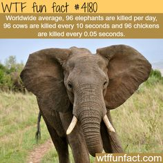 How many elephants are killed each day? -  WTF fun facts