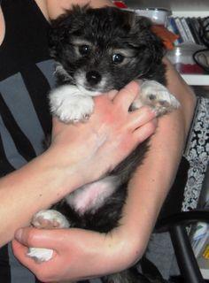 Mix breed dog. Puppy dog.