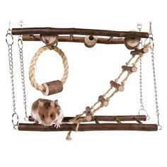 rodent jungle gym