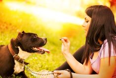 PIJAC highlights how Pet Sitters International (PSI) is helping American pet owners understand how to find a professional pet sitter.