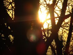 The sun setting through the trees
