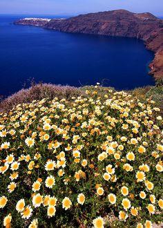 Seascape with daisies, Santorini, Greece