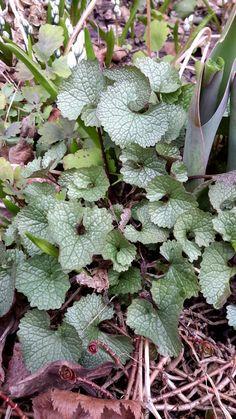 Succulents, Garden, Plants, Vegetable Garden, Garten, Lawn And Garden, Succulent Plants, Gardens, Plant