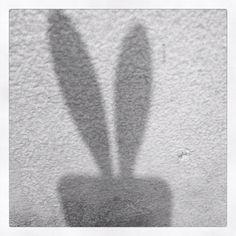 7. shadow