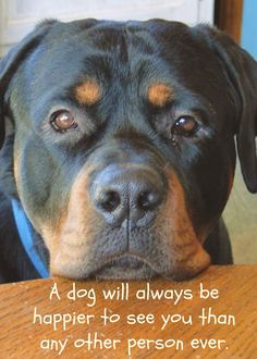 A #dog will always be happier to see you than any other person ever.