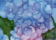 ACEO watercolor BLUE hydrangea original painting SFA miniature flower macro…