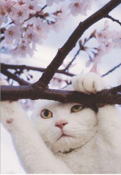 Go with cats Iwago Mitsuaki  ねこ歩き にゃんきっちゃん
