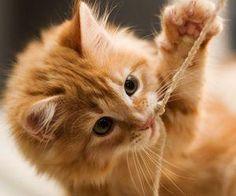 #cuteness #cat #kitten