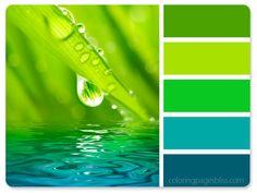 Water Droplet on Leaf Color Palette