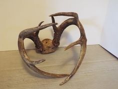 8 Point Whitetail DEER ANTLERS / HORNS natural deer horns craft supply man cave by Barndoorfinds on Etsy