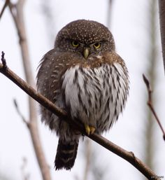 my sweet owl Funny Owls, Bird, Friends, Animals, Sweet, Amigos, Candy, Animales, Animaux