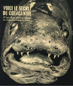 Le poisson fossile