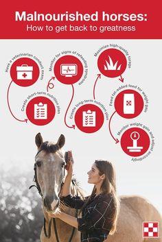 Refeeding the Malnourished Horse | Purina Animal Nutrition Refeeding Syndrome, Horse Feed, Animal Nutrition, Dental Problems, Veterinary Care, Horses, Texas, Horse, Texas Travel