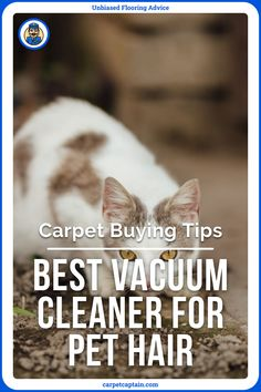 Any vacuum will make your dog or cat run away thinking the world is ending. But your hairy friend is going to need to deal with it because there's nothing worse than realizing your clothes look like a used lint roller when you leave the house. But here's the big question: what are the best vacuums for pet hair? Vacuum Reviews, Pet Allergies, Cat Run, Winners And Losers, Best Vacuum, Vacuums, Dog, Pets, Hair
