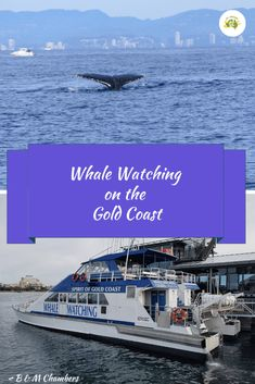 The Gold Coast is one of the best spots to go Whale Watching. You are pretty much guaranteed to see some action.