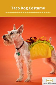 """Lets """"taco"""" 'bout this adorable costume for your furry friend. Have them strut the street this Halloween in this tasty treat of a costume. // Project instructions available through the link."""