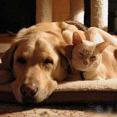 Welcome Best Pet Store & Pet Daycare- Pet toys – Petupdown
